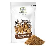 Cordyceps : Cordyceps Bio Pulver