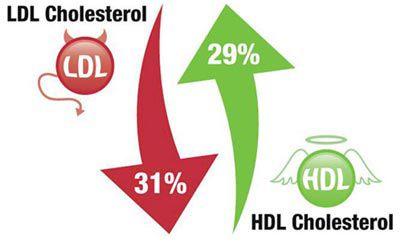 Cholesterin-Kontrolle